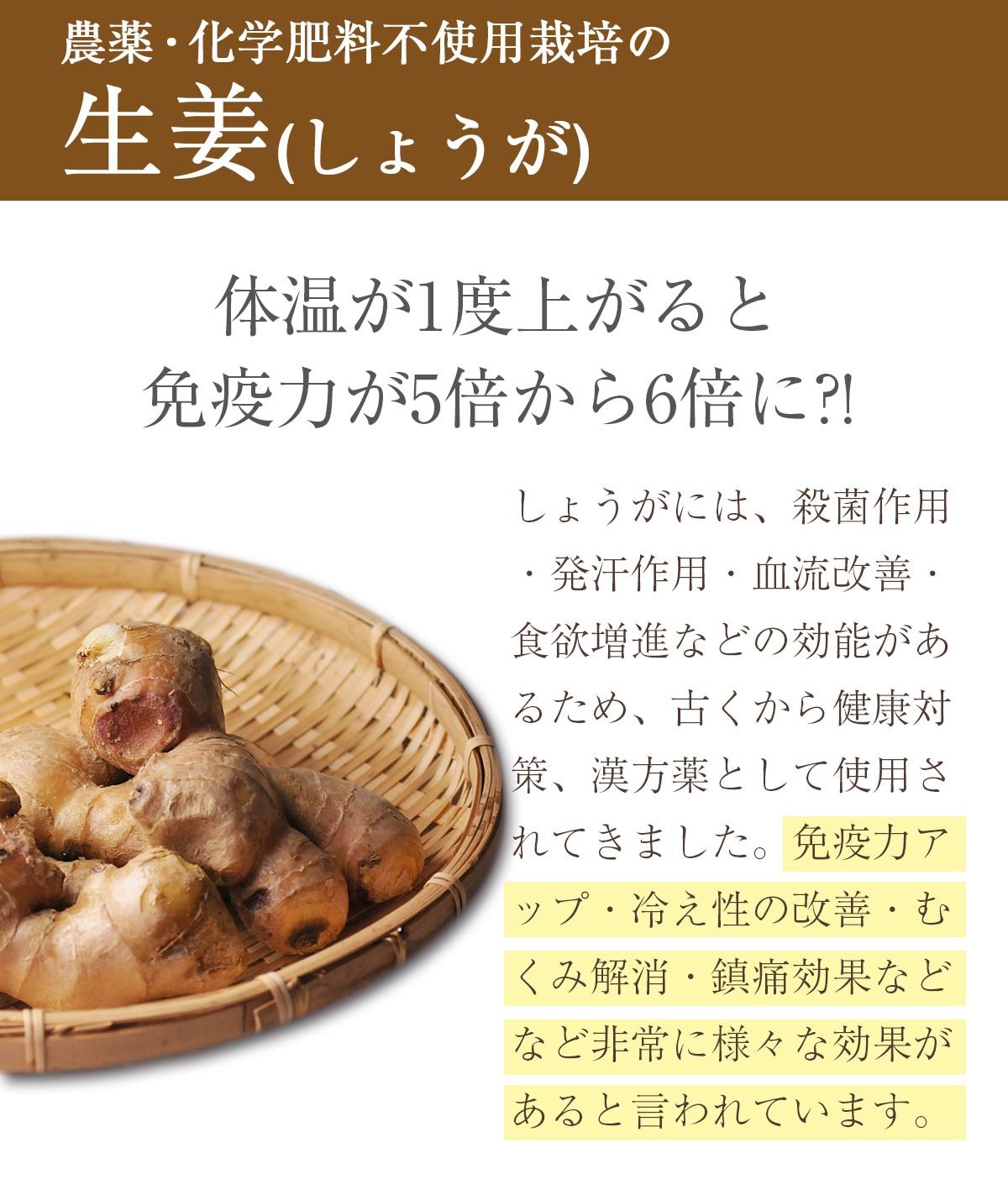 農薬・化学肥料不使用栽培の生姜