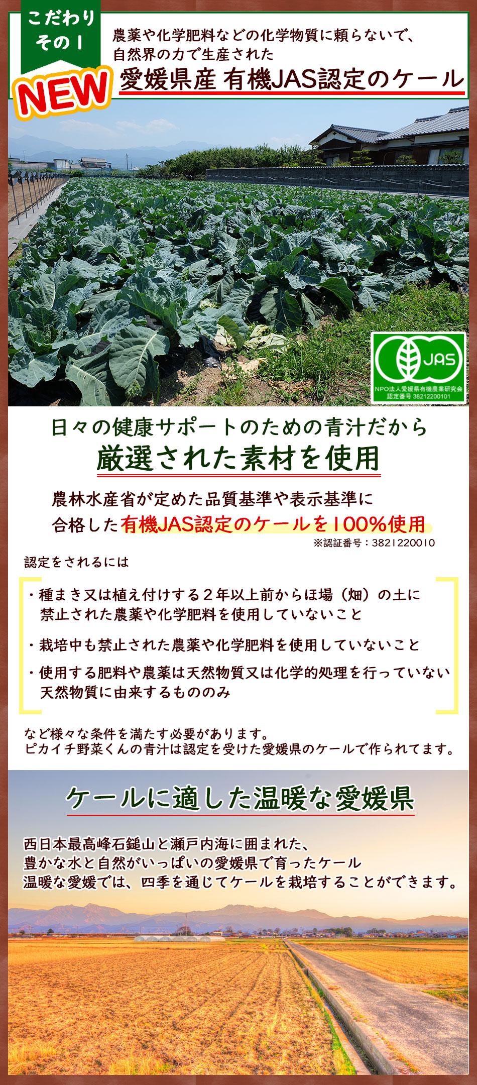 愛媛県産有機JAS認定の無農薬ケール