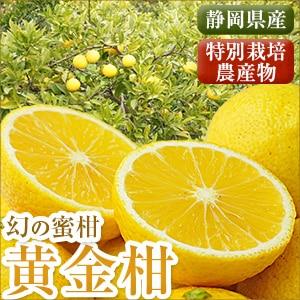静岡県産黄金柑