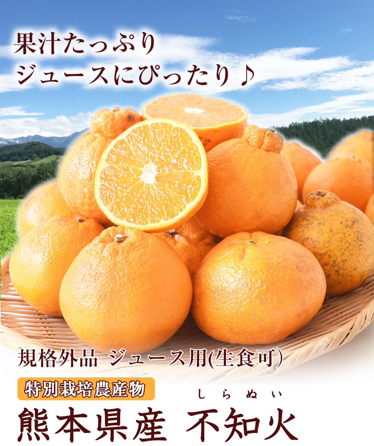 規格外品ジュース用熊本県産不知火