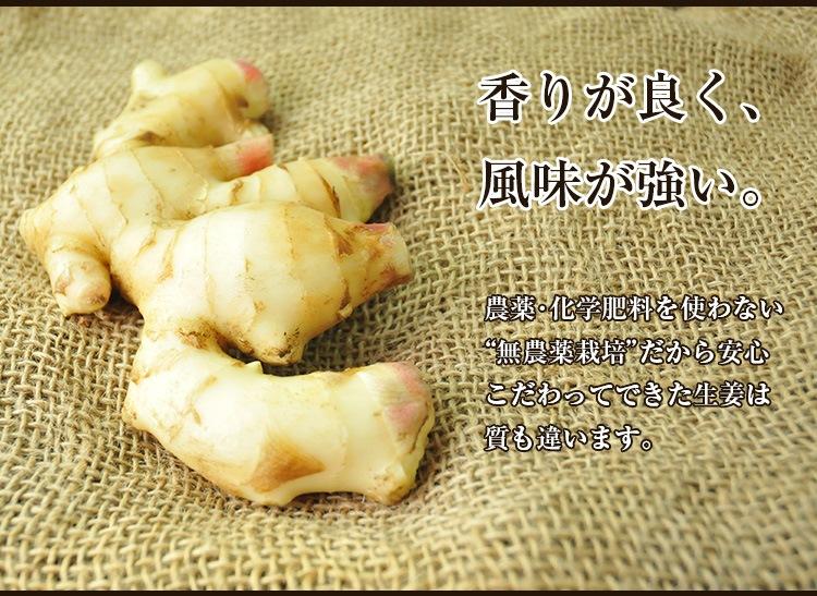 新生姜 農薬・化学肥料を使わない無農薬栽培だから安心こだわってできた生姜は質も違います。