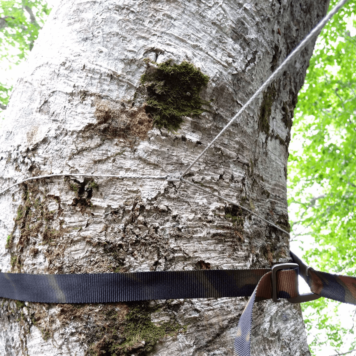 ダッチフックを木側の寄せてロープを締める