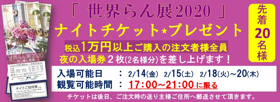 世界らん展ナイトチケットプレゼントキャンペーン!エフラの胡蝶蘭1万円以上お買い上げで2名1組様ご招待