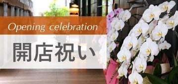 開店祝いに悩んだらエフラの植物をご利用ください。贈り物のマナーなどご相談承ります。