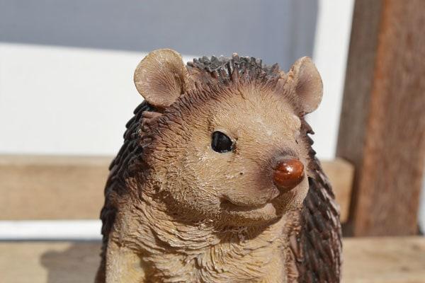 チアフルフレンズハリネズミのフレッドガーデニング