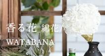 香る花-綿花 watabana