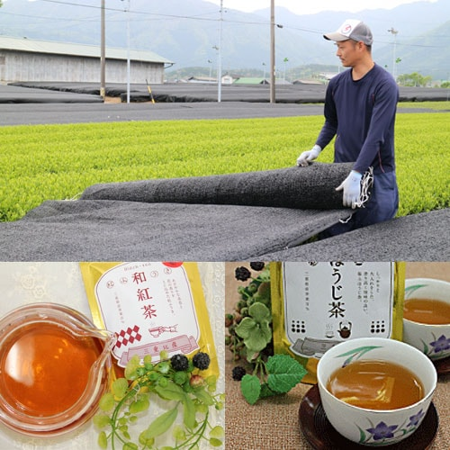 かぶせ茶畑とティーセット