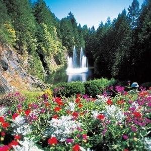 カナダの花々