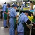 工場での就労支援