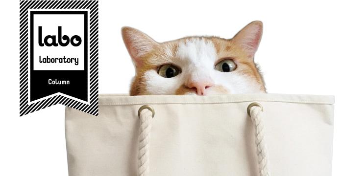 ラボ、猫とバッグの写真