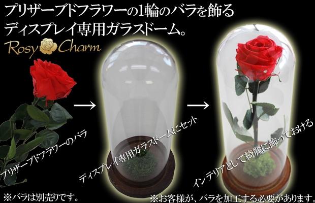 ガラスドーム バラ ディスプレイ専用
