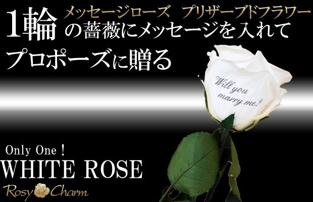 誕生日 1本 バラ