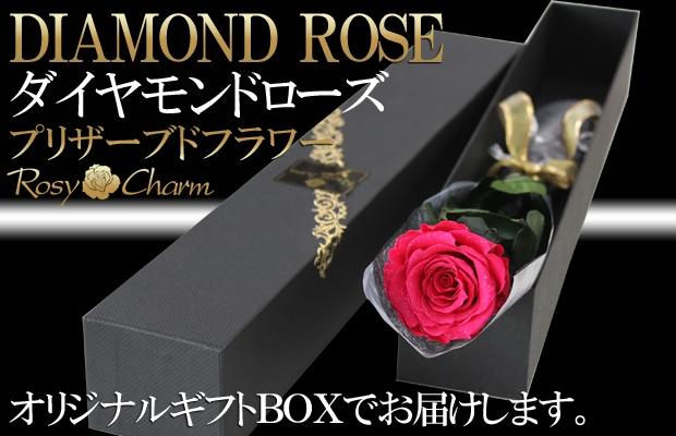 ダイヤモンドローズ ホットピンクのバラ