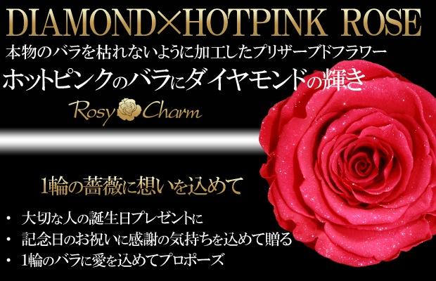 ダイヤモンドローズ ホットピンク バラ