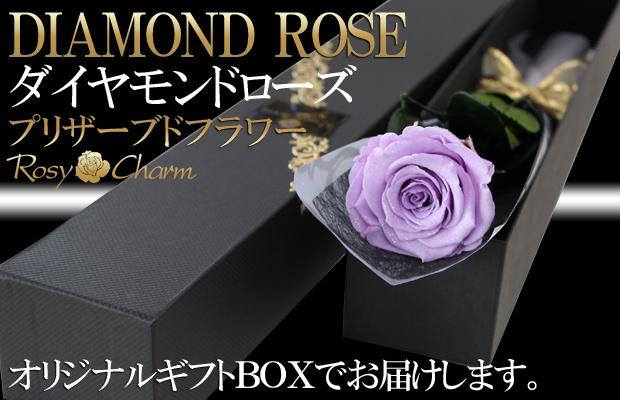 ダイヤモンドローズ 紫のバラ