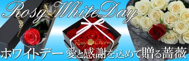ホワイトデーに贈るバラ width=