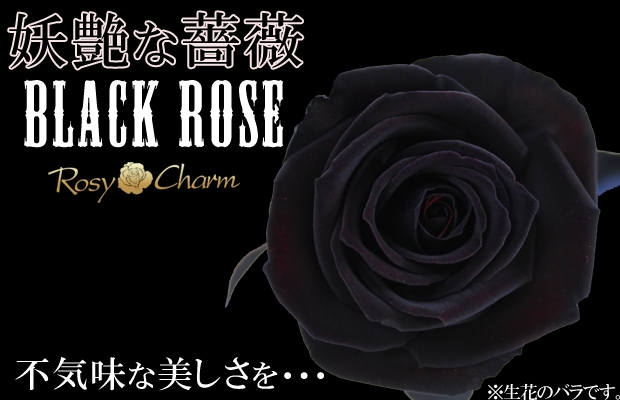 黒いバラ1輪