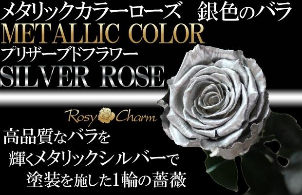 シルバーローズ 銀色のバラ