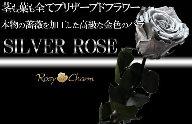 銀色のバラ