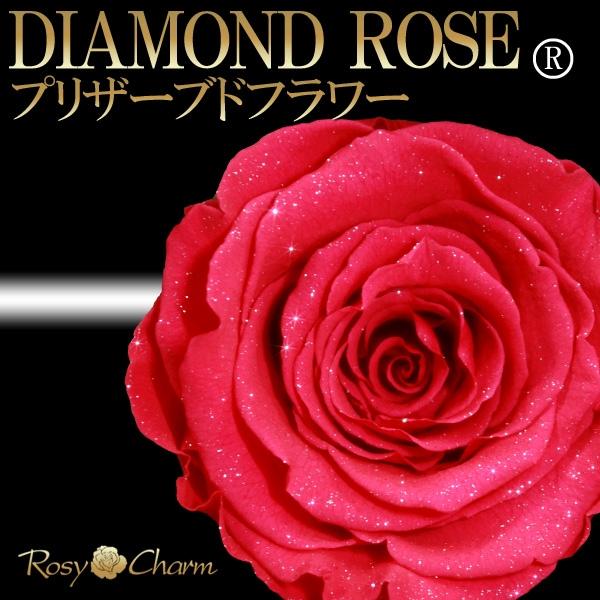 ダイヤモンドローズ ホットピンクの薔薇