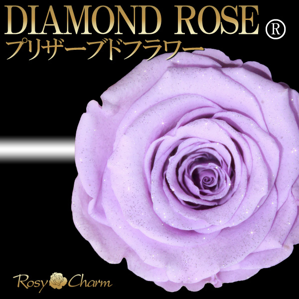 ダイヤモンドローズ 紫の薔薇