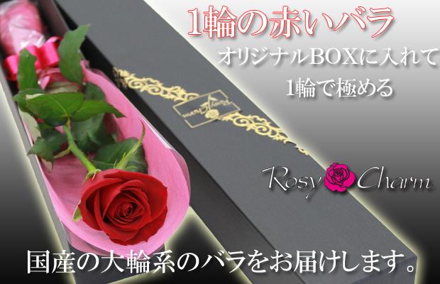 1本のバラ ギフト サムライ