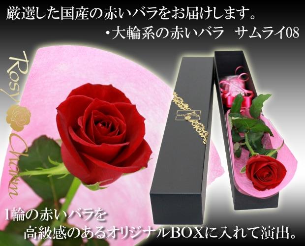 1輪のバラギフト 赤いバラ サムライ