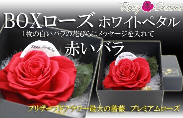 BOXローズ ホワイトペタル 赤いバラ