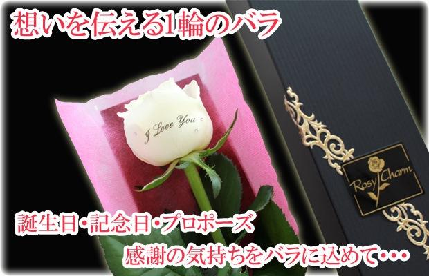 メッセージローズ白いバラ1輪