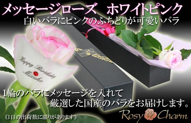 1輪のバラ メッセージローズ ホワイトピンク