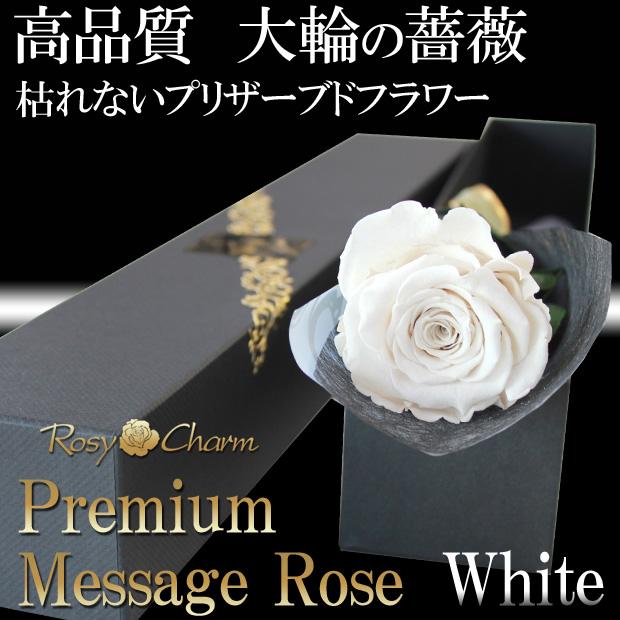 大輪の白いバラ1本