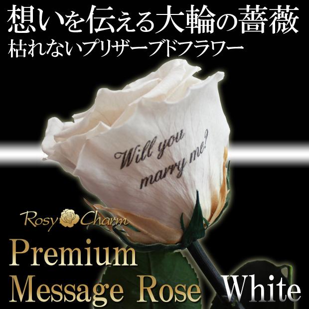 メッセージ入り 大輪の白いバラ