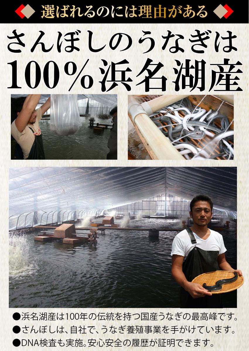 浜名湖うなぎ100%