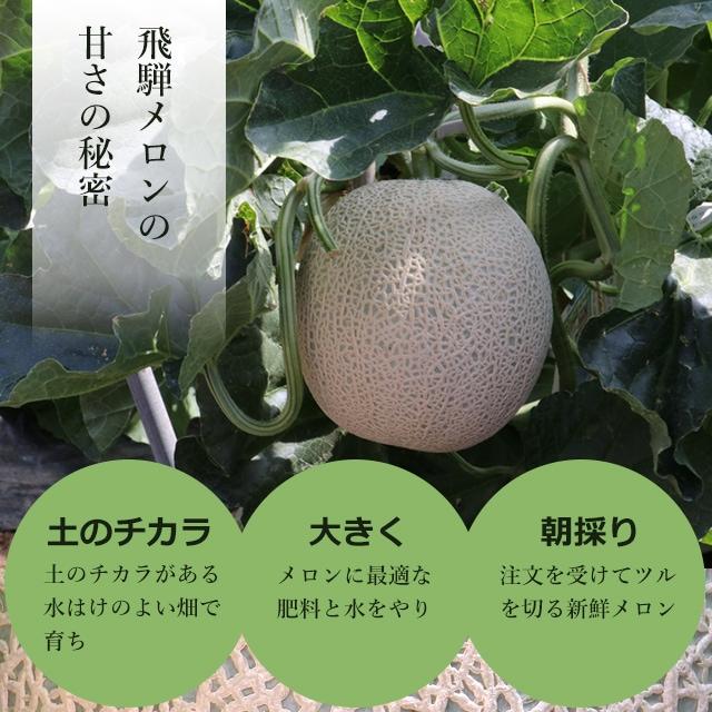 アールスメロン 創始者林農園の飛騨メロン 1玉2L〜3L 1.4kg〜1.6kg