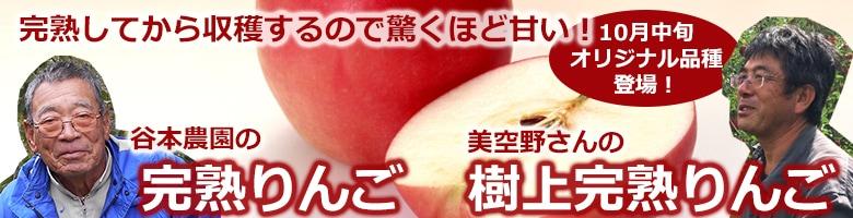樹の上で完熟を待つから旨くて甘い!飛騨の日差しをいっぱい受けて育ったおいしい新鮮リンゴ