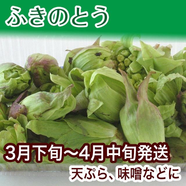 ふきのとう 飛騨の山菜 新鮮野菜 地場野菜 春の味覚