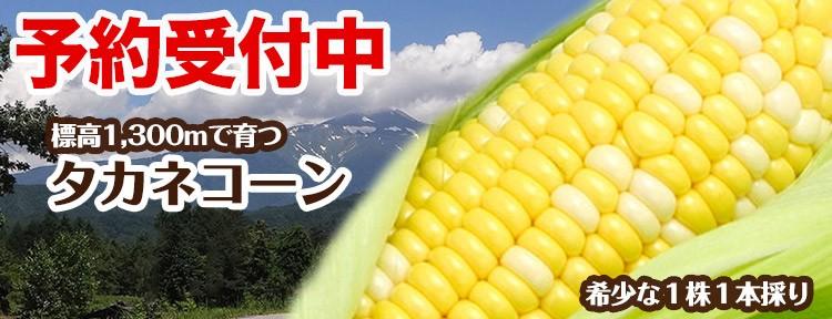 飛騨高山 お土産 夏のとうもろこし 産地直送 タカネコーン 6月早割5%オフ