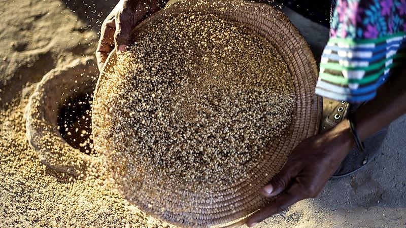 アフリカ南部の砂漠から来たマルラオイル