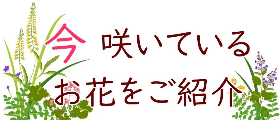 今 咲いているお花をご紹介