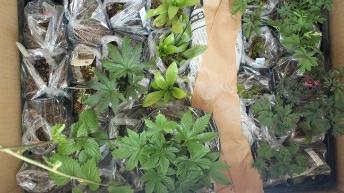 様々な苗をお選びいただいた場合の梱包例