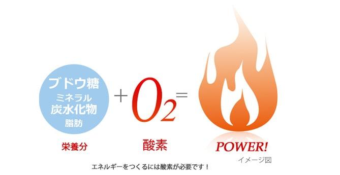 栄養分+酸素=エネルギー