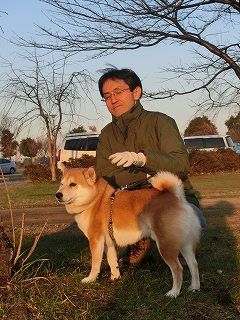 柴犬の丈(たけし)くん