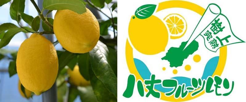 八丈フルーツレモン