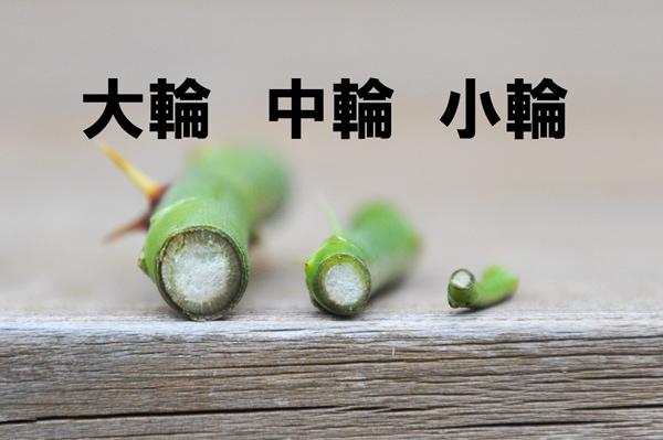 夏剪定06
