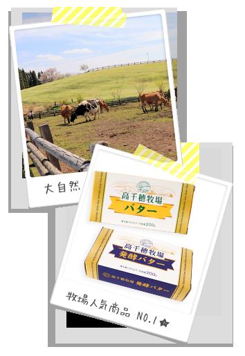 高千穂牧場の牛たちと人気商品