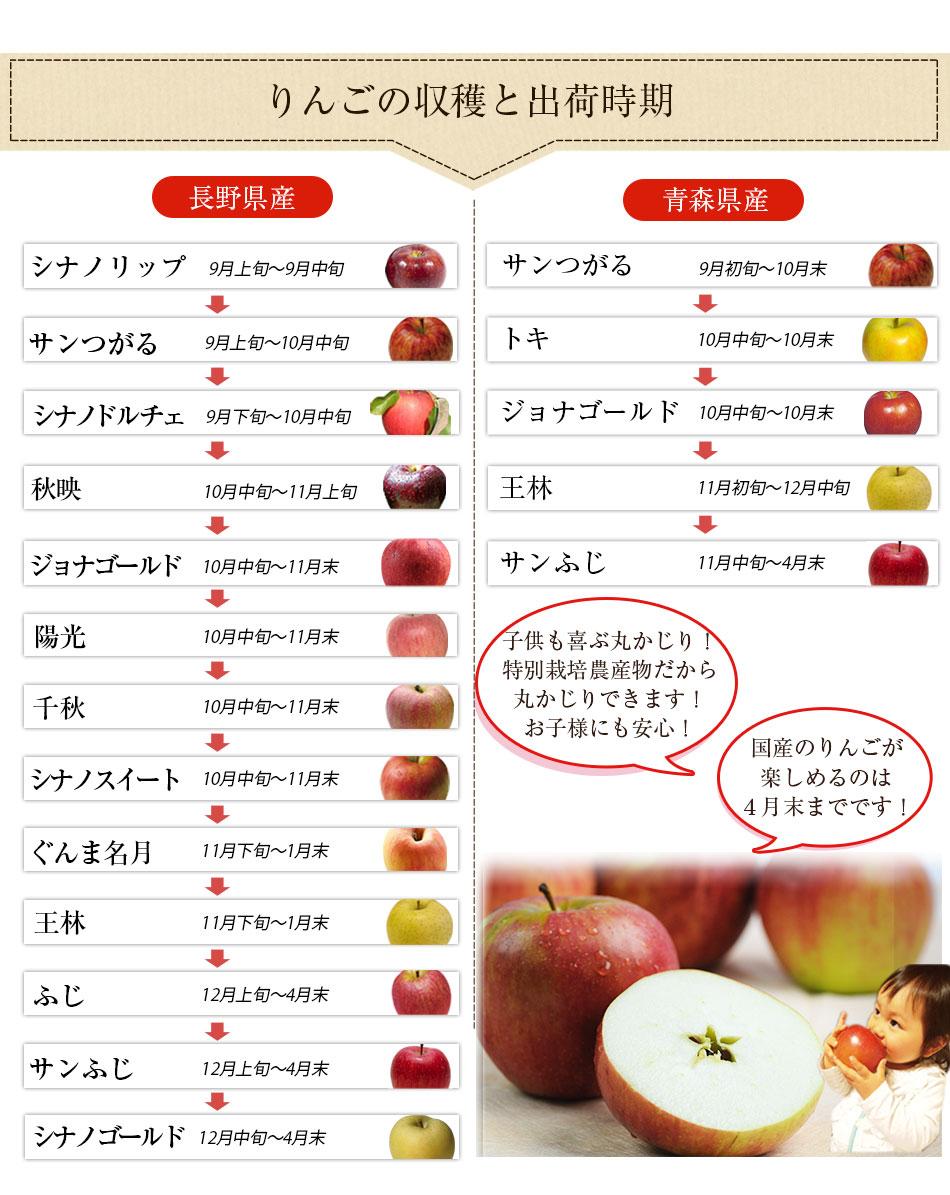 長野りんごと青森りんごの収穫と出荷時期