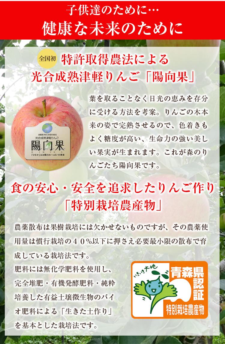 特許取得農法による光合成熟津軽りんご「陽向果」