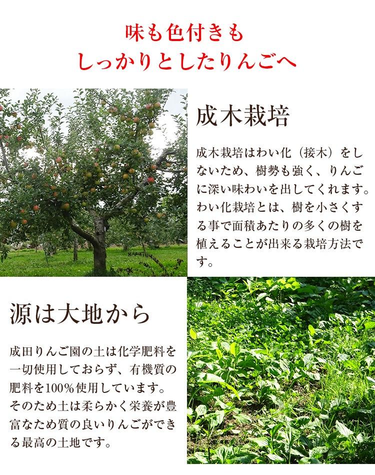 味も色づきもしっかりとしたりんごになる成木栽培