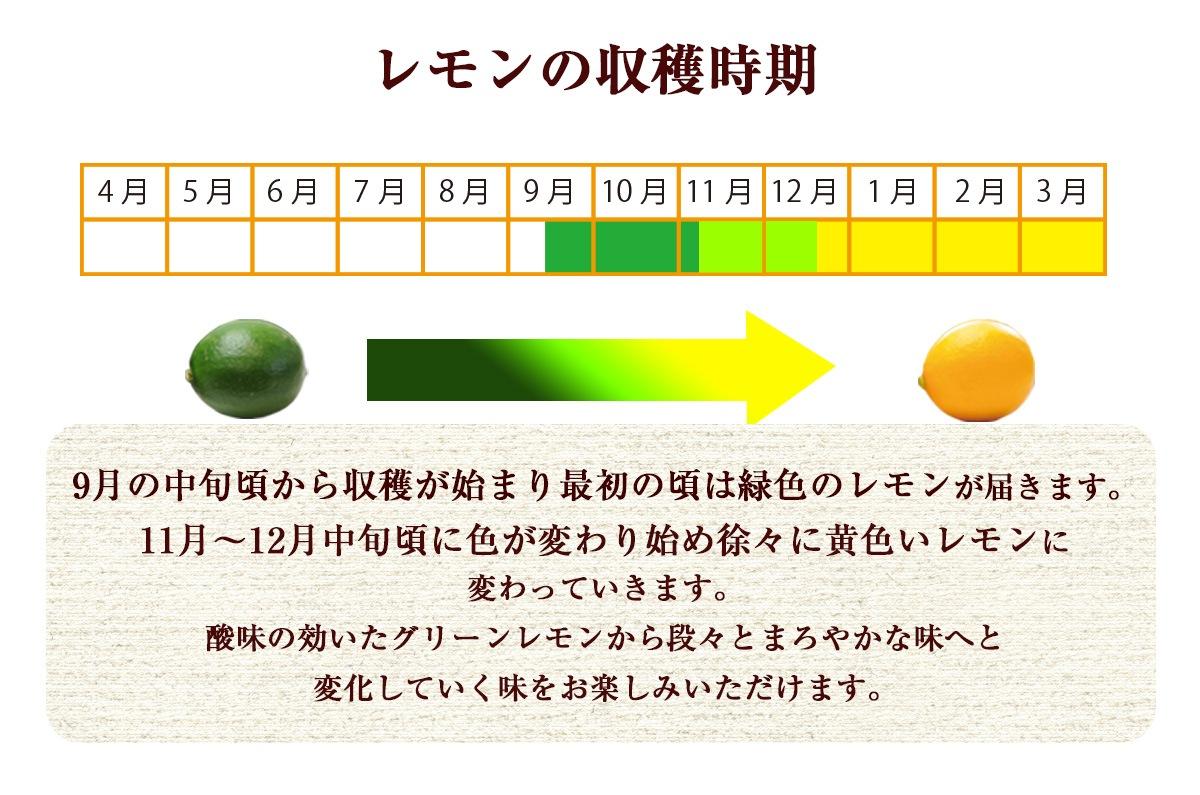レモンの収穫時期