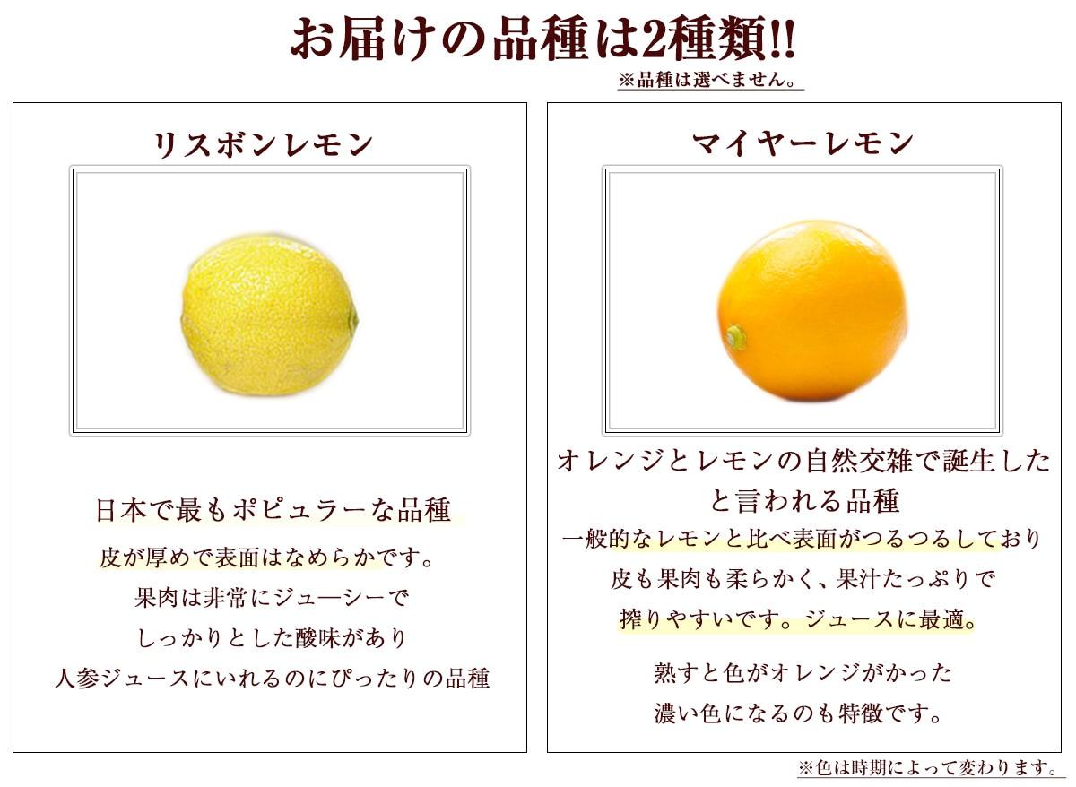 品種はマイヤーレモンとリスポンレモン